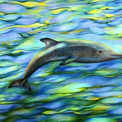 Träumender Delphin - Kunstdruck