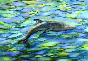 Träumender Delphin - Passepartout